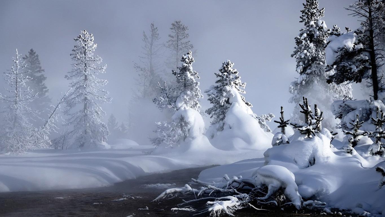 Snowy fir trees wallpaper 11329 1365x768