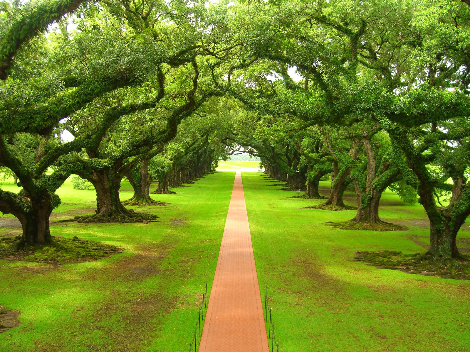 Oak Tree Plantation by Thislilpiggyflew   Desktop Wallpaper 1600x1200