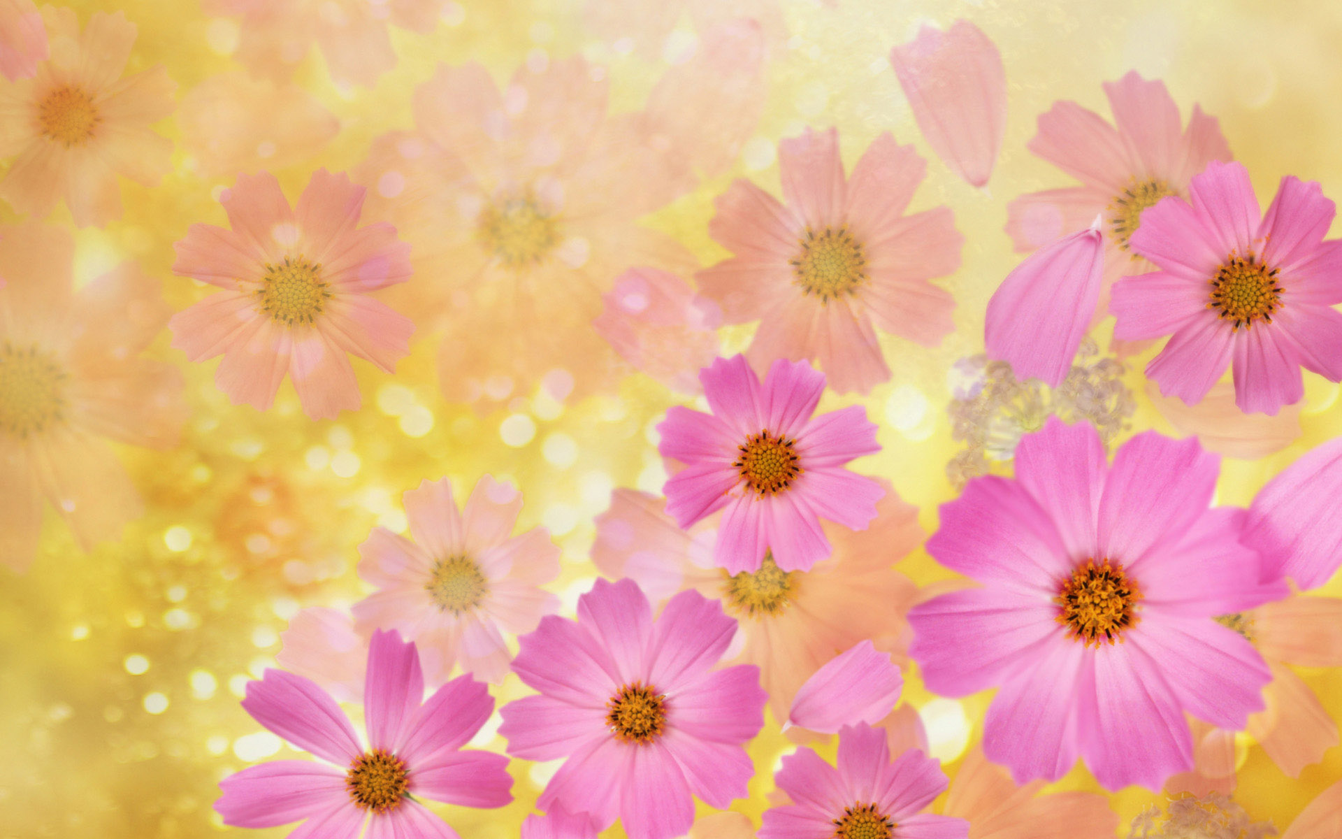 Beautiful Pink Spring Flowers Wallpaper Desktop Background 1920x1200