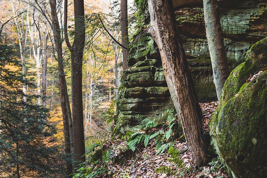 photo forest daytime 4k wallpaper environment green moss 910x607