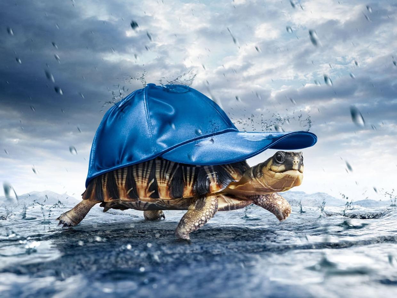 Rain Amazing Wallpapers 3D Turtle in Rain PC Wallpaper 1240x930