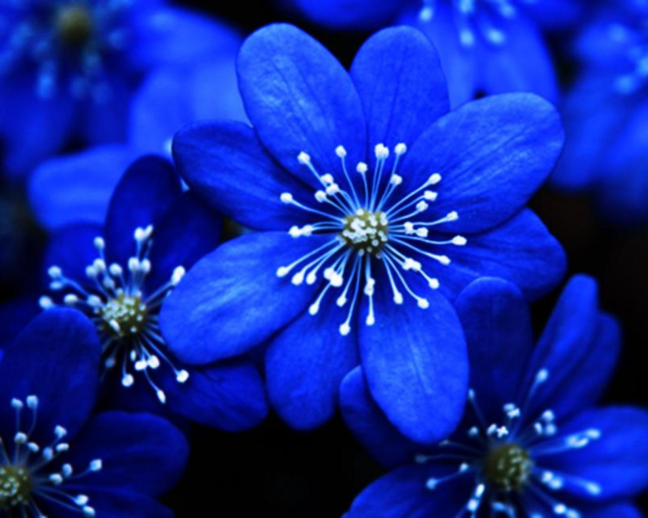 [47+] Blue Floral Wallpaper for Walls on WallpaperSafari