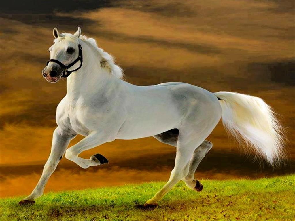 Free Download American Quarter Horse Wallpapers 49 American