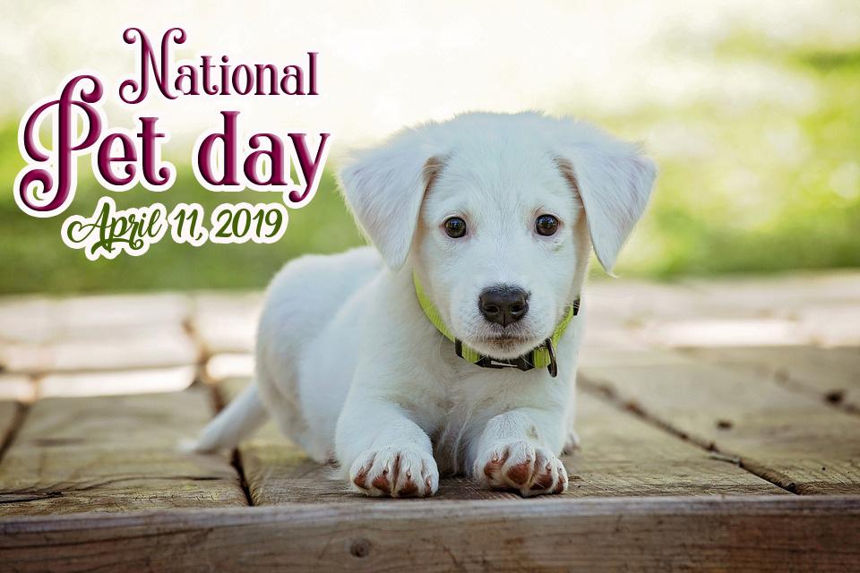 international pet day 2019 wallpaper Archives   Hindi Graphics 960x640
