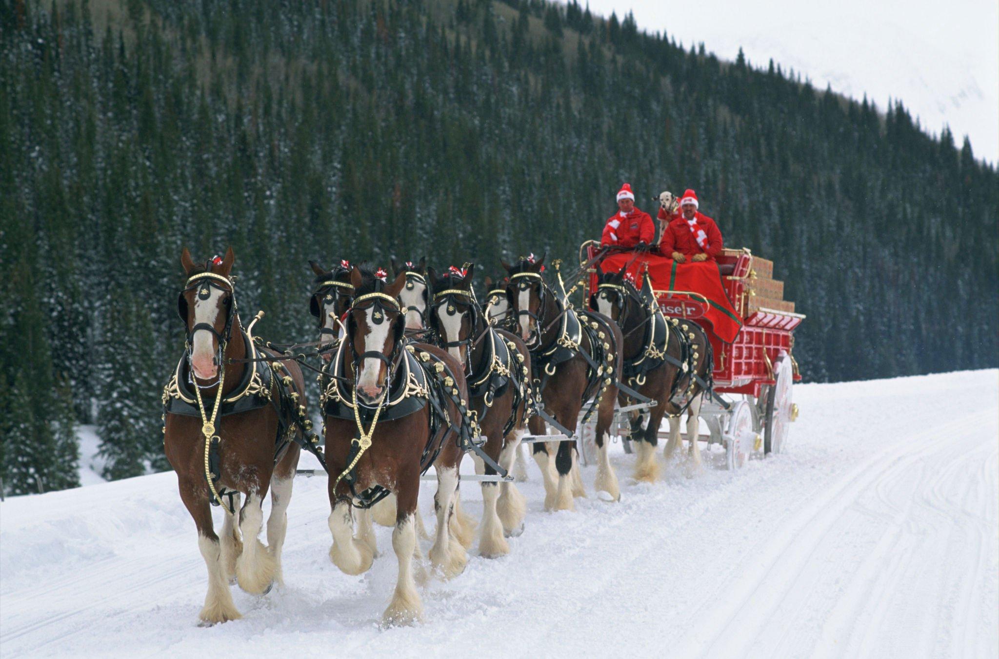 christmas sleigh horses 1920x1080 wallpaper - photo #39