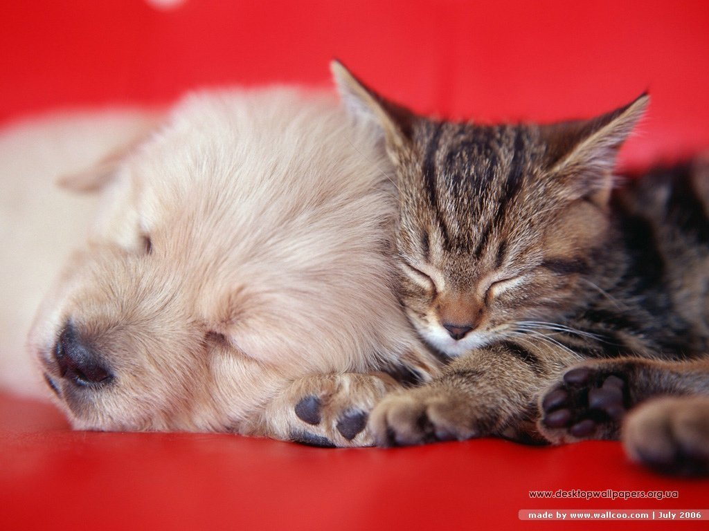 Dogs and Cats   dogs vs cats Wallpaper 13631926 1024x768