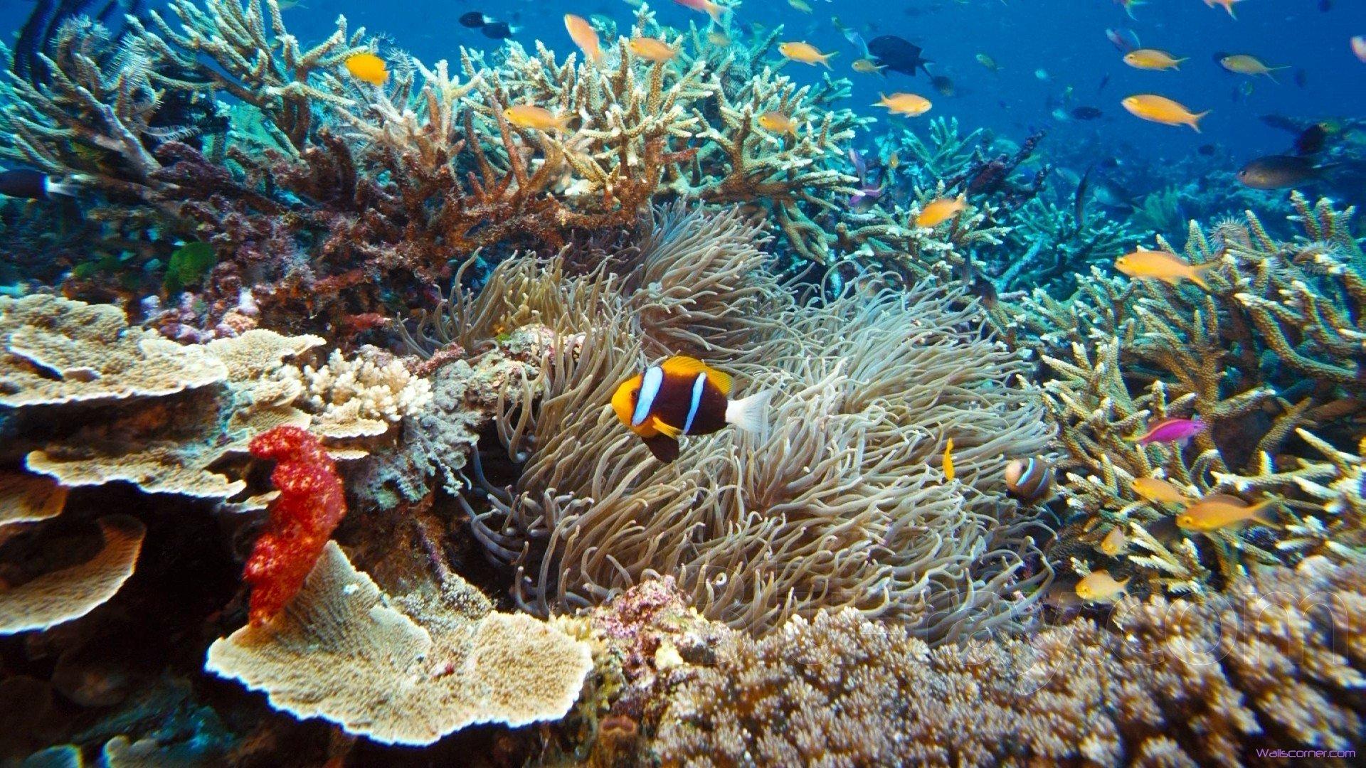 sea wallpaper nature dead - photo #34