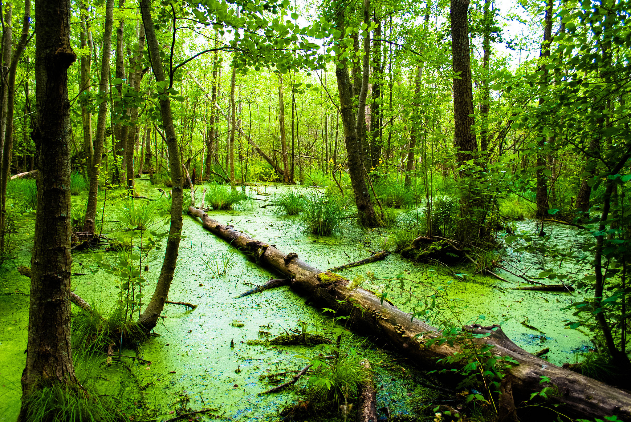 Pics Photos   Swamp Background 2048x1371