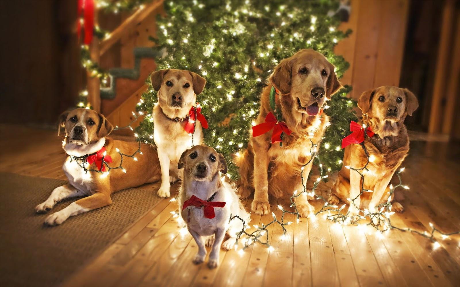 Puppy Christmas Wallpaper - WallpaperSafari