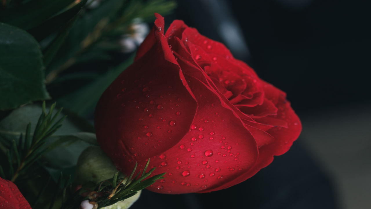 100 Happy Valentines Day Wallpapers 2019 Talk in Now 1280x720