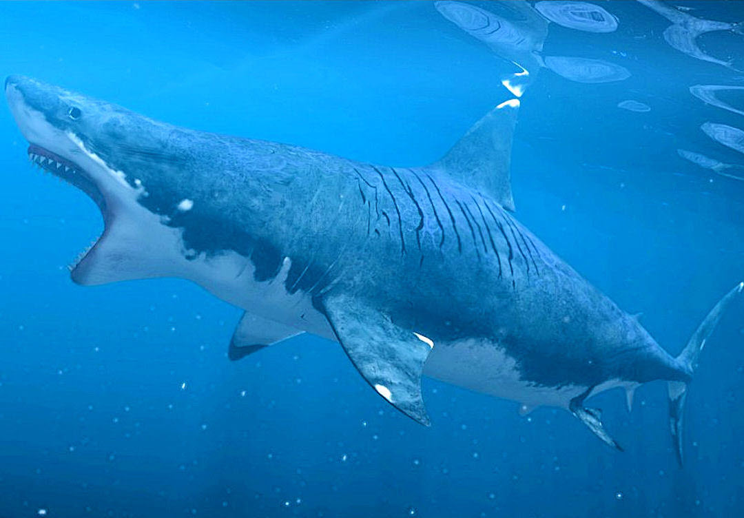 Megalodon Wallpaper HD - WallpaperSafari