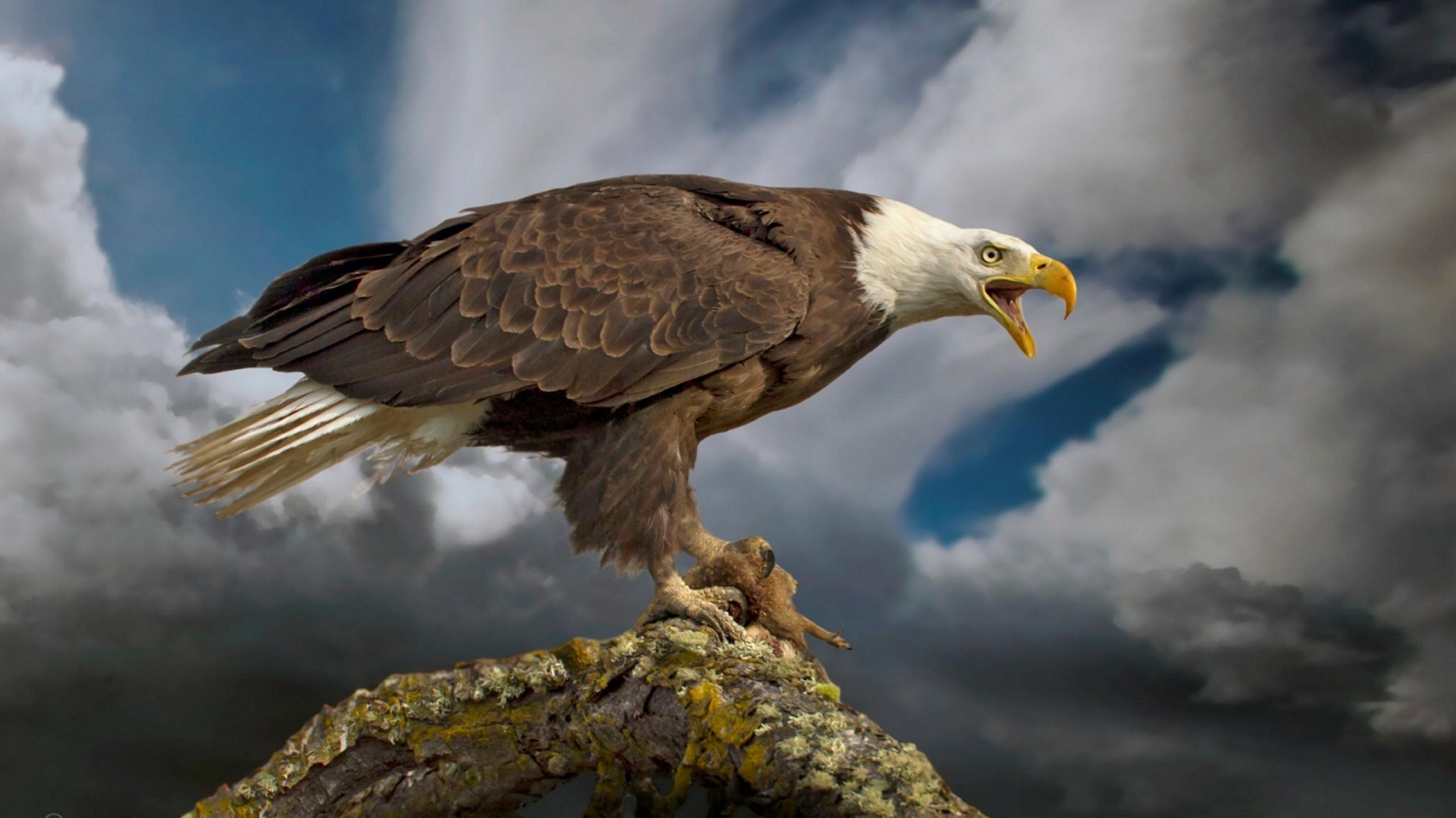 flag wallpaper american patriotism eagle 2560x1440