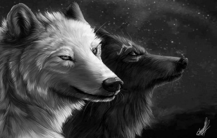 44 black and white wolf wallpaper on wallpapersafari