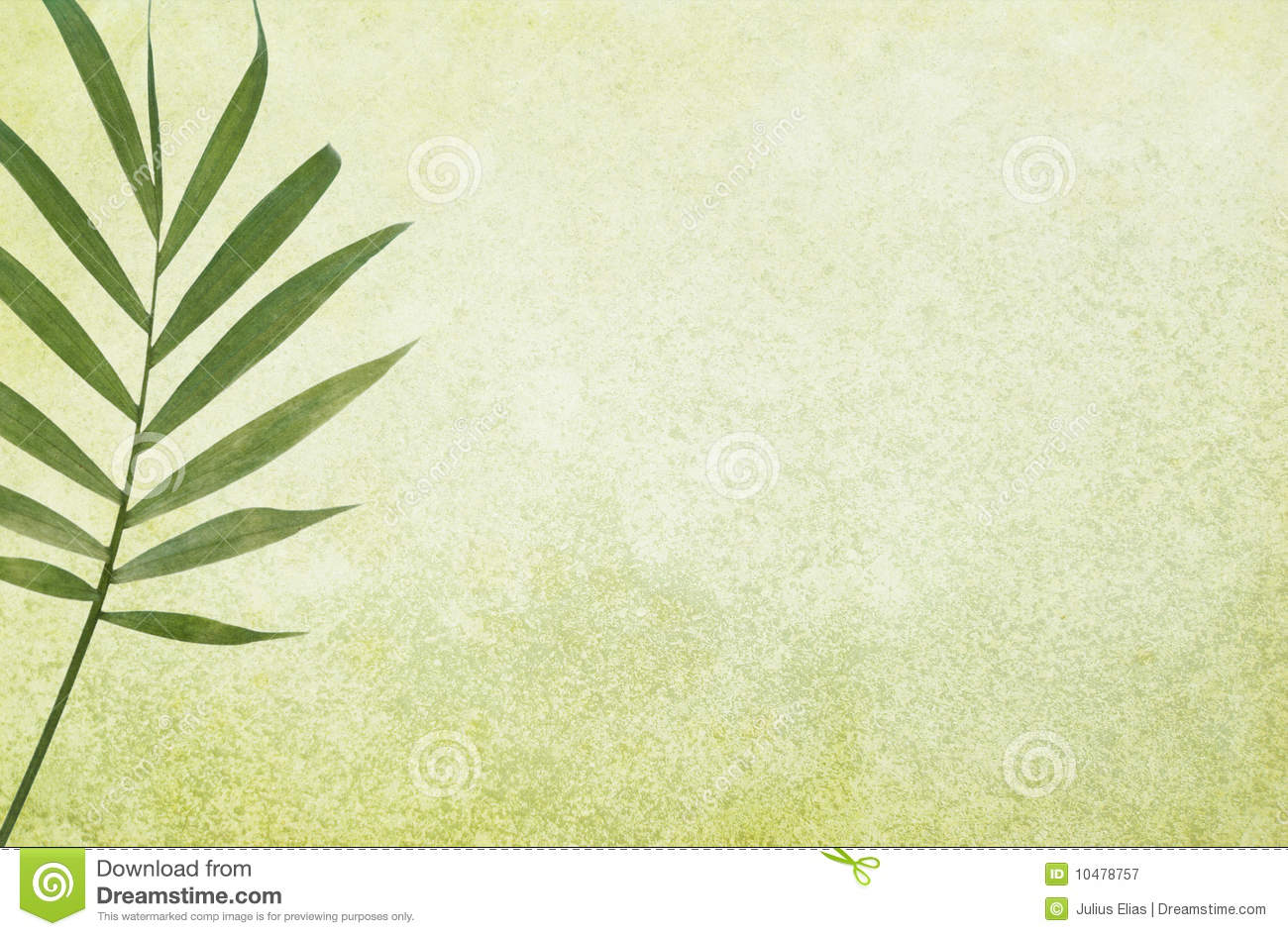 Palm Frond Wallpaper Wallpapersafari