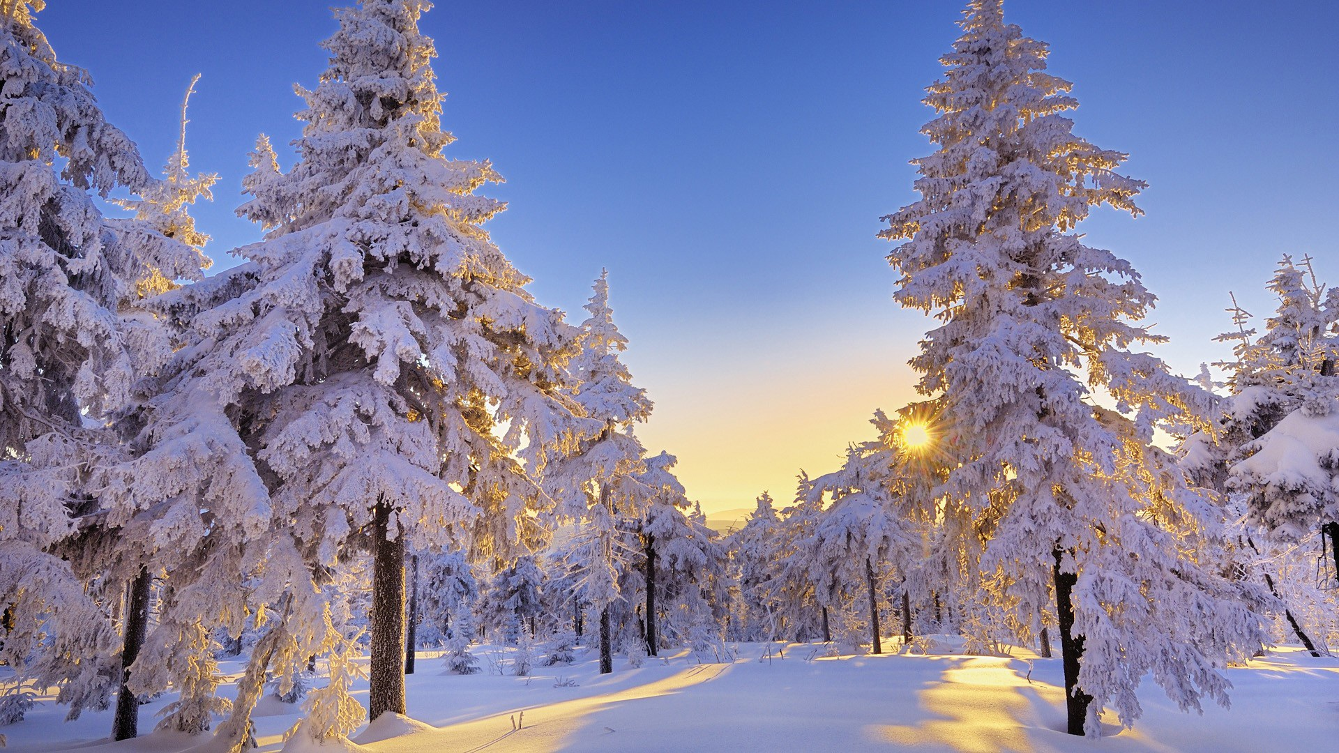 Winter Sun Wallpapers 1920x1080