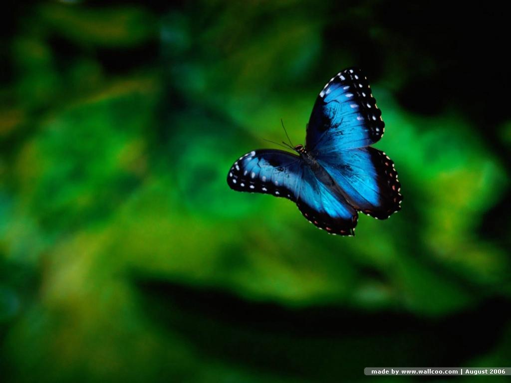 Butterfly Wallpaper Desktop 10314 Hd Wallpapers in Cute   Imagescicom 1024x768