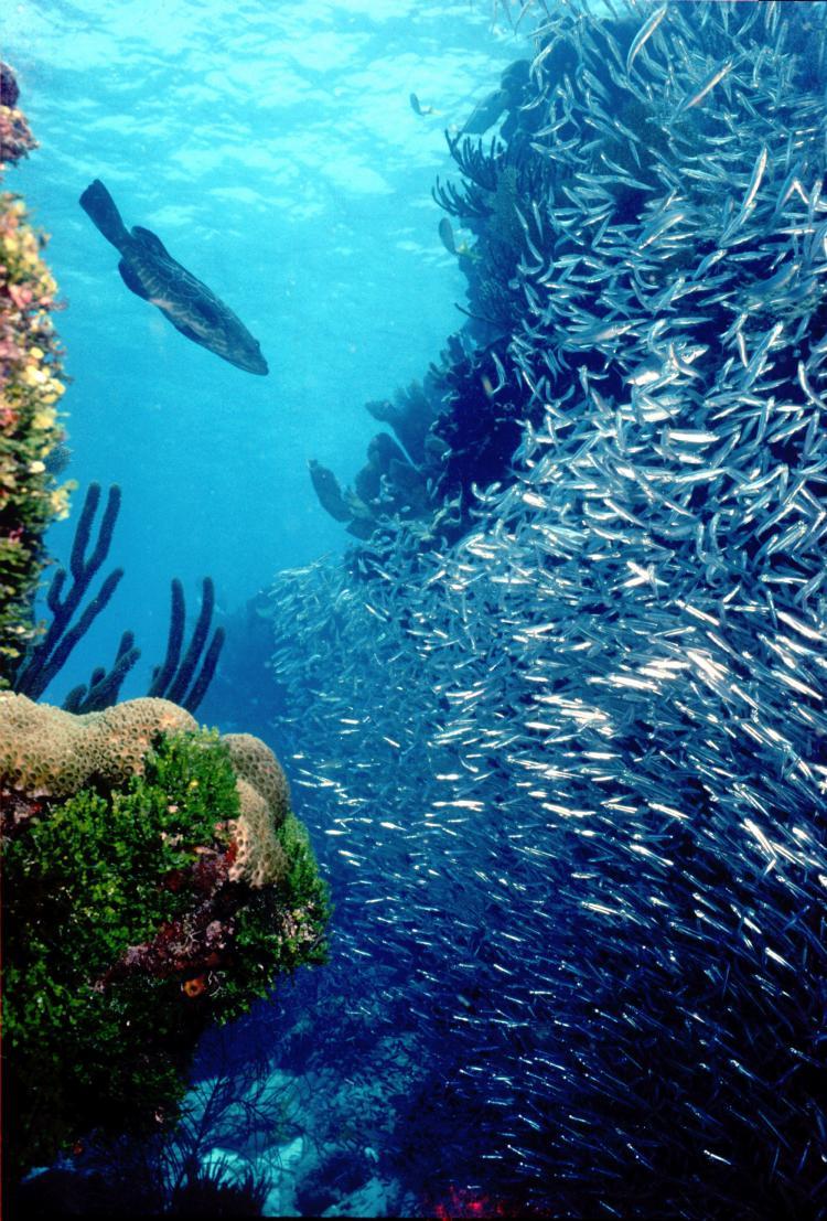 coral reef wallpaper HD Background Wallpaper 750x1107