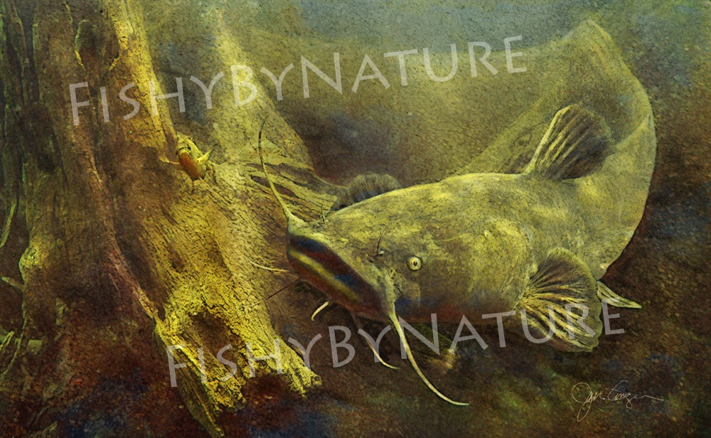Flathead catfish painting
