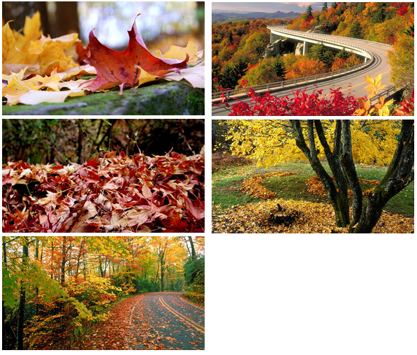 Download Autumn themes for Windows 7 [Desktop Fun] Pureinfotech 597x508