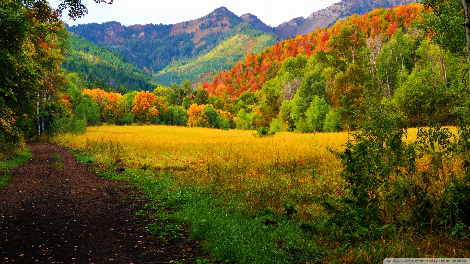 ... Canyon Fall Colors Wallpaper 1920x1080 Provo, Canyon, , , Fall, Colors