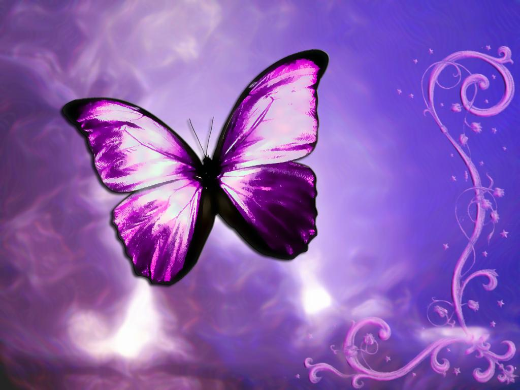 Butterfly design wallpaper Funny Animal 1024x768