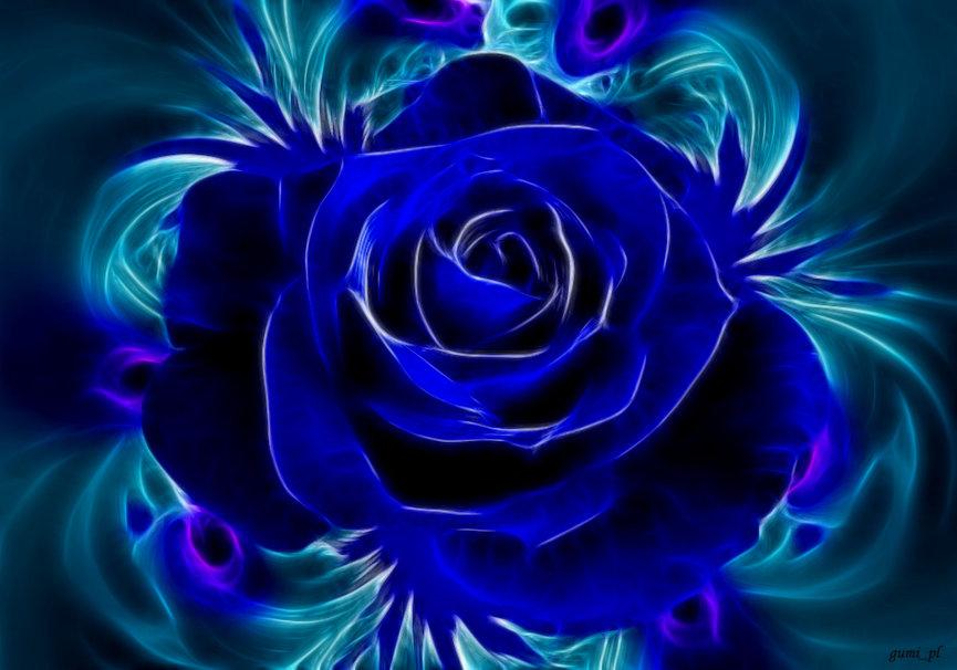 blue rose wallpaper wallpapersafari