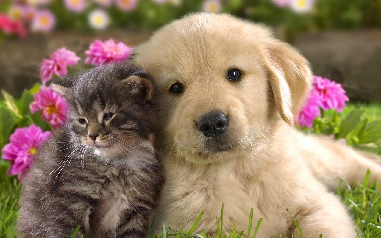 All new wallpaper Cats and dogs Wallpapers 1280x800
