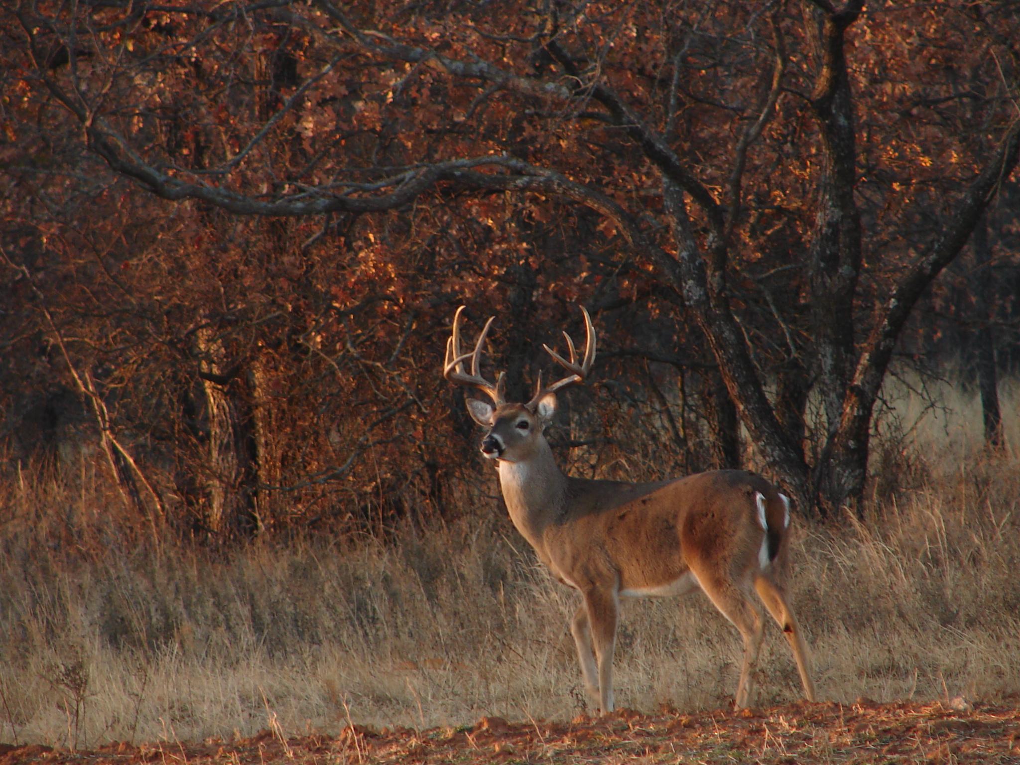 Whitetail Wallpaper Whitetail deer hunting forums 2048x1536