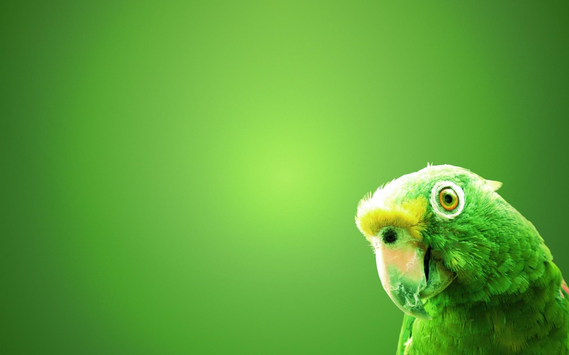 Green Parrots Bird Wallpaper HD Backgrounds Download 4k High 1920x1200