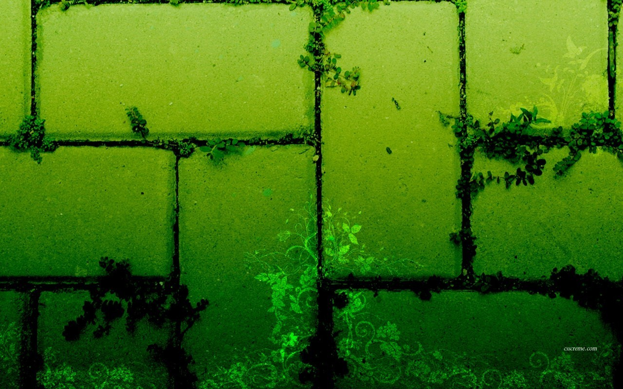 Green Bricks Wallpaper   Green Wallpaper 20988829 1280x800