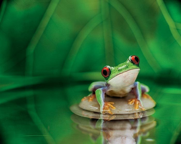 FROG HIGH QUALITY WALLPAPER Hd Wallpapers 700x557