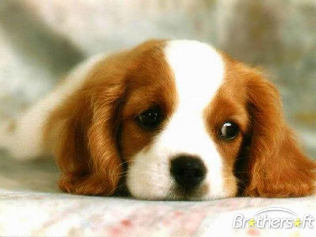 utitkghgfo Dogs Puppy wallpaper 640x480