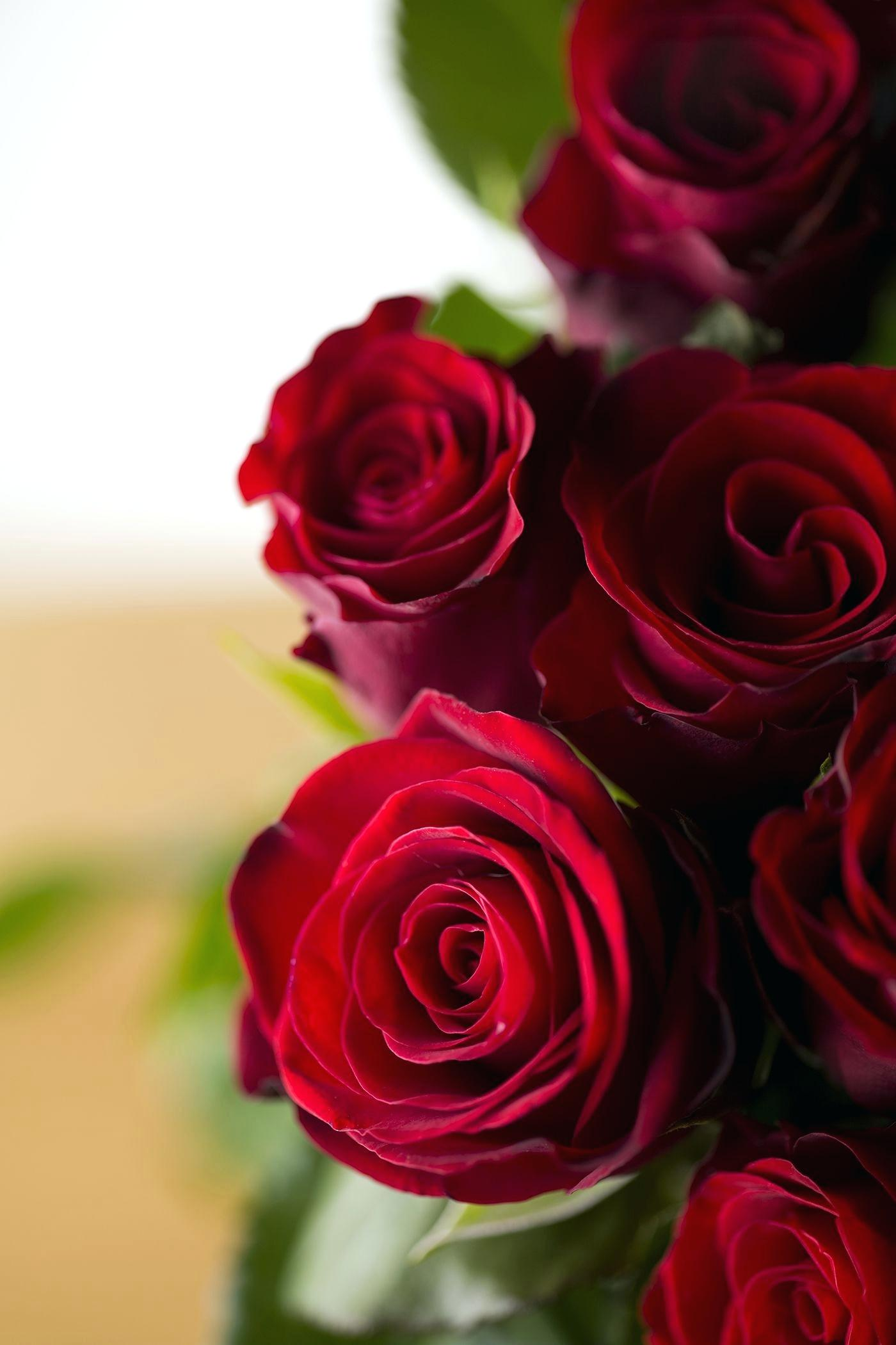 Red Roses Flower Meanings Images Rose Hd Download   Flower 1400x2100
