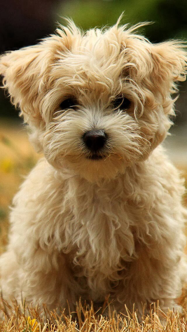 Dog wallpaper Awesome WallpapersBackgrounds Pinterest 640x1136