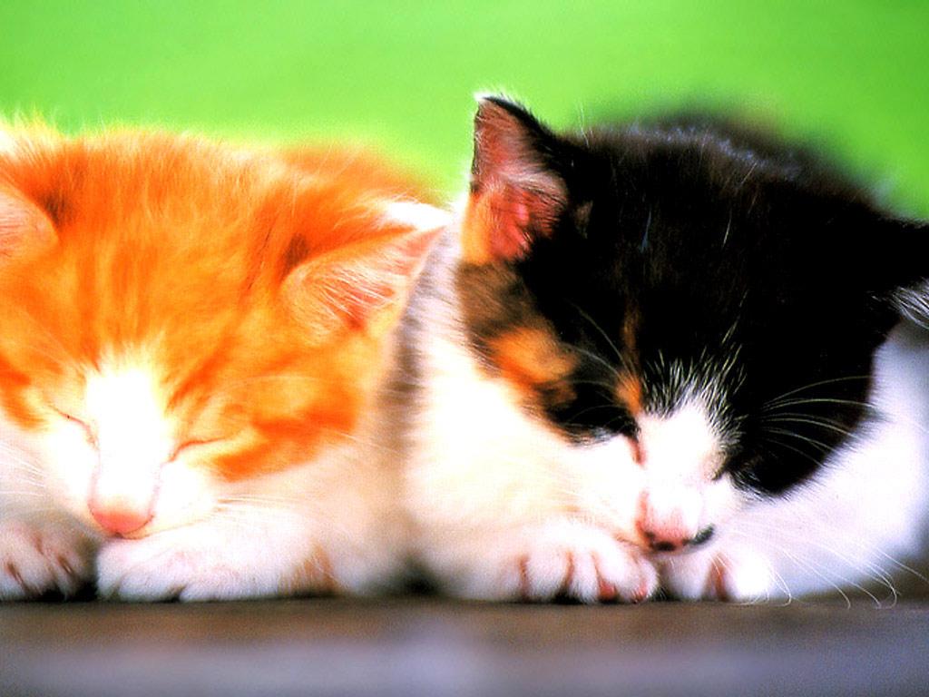 kitten achtergronden jonge katjes hd kittens wallpapers foto 1 jpg 1024x768