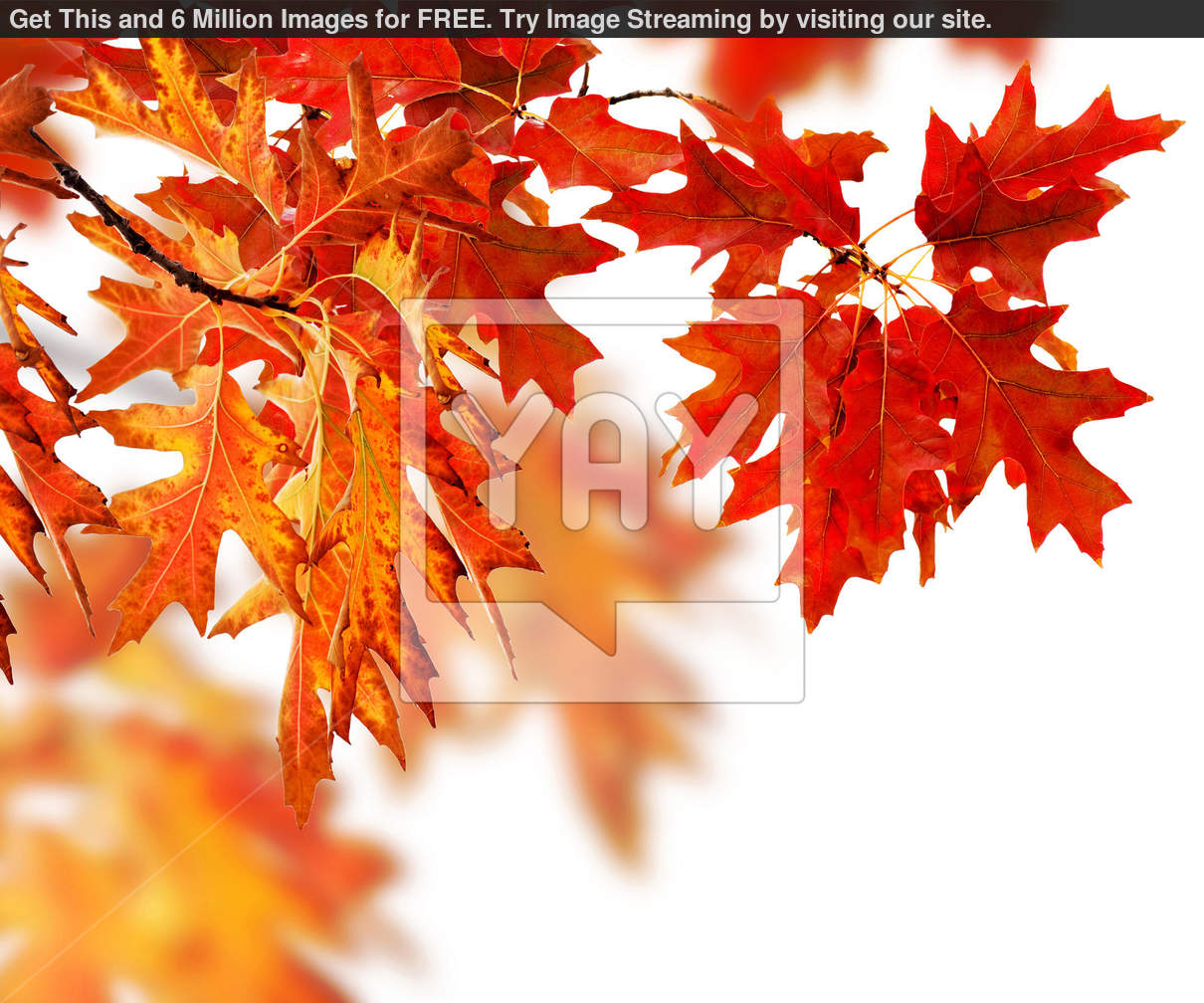 Autumn Leaves Wallpaper Border Save money   get images for 1210x1008