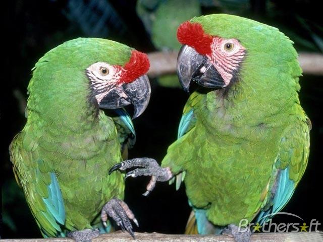 Bird Picture Screensaver Bird Picture Screensaver 640x480