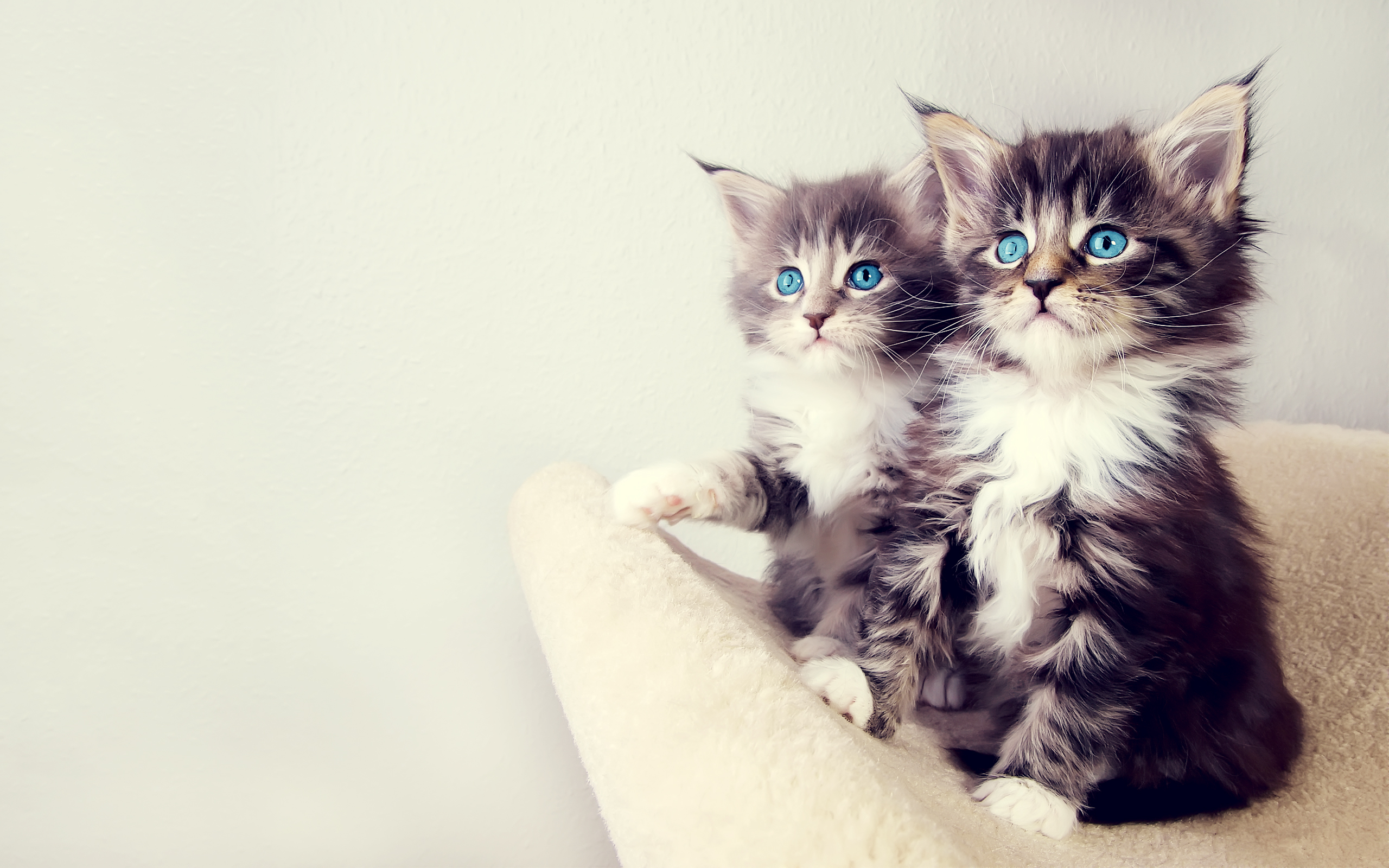 Cute Kittens Wallpapers HD Wallpapers 2560x1600