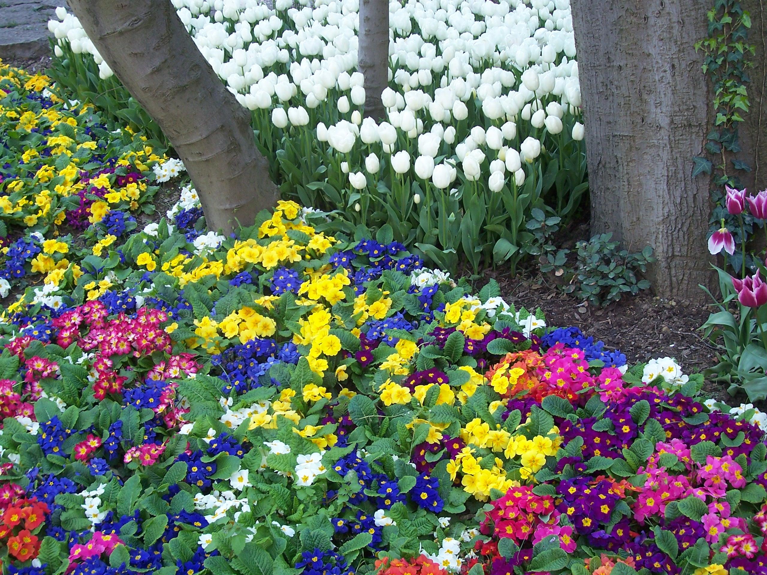 FLOWERS FLOWERS EVERYWHERE   Spring Wallpaper 37259300 2560x1920
