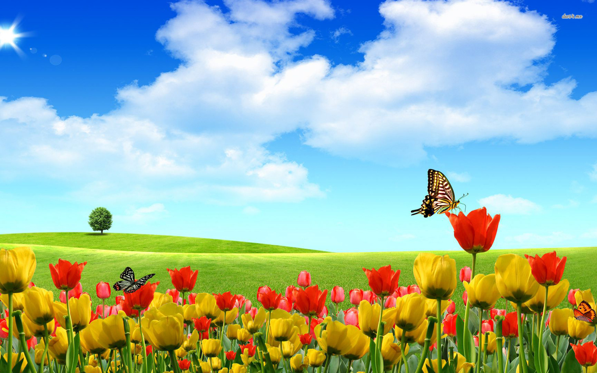 Spring Butterflies Wallpaper Wallpapersafari