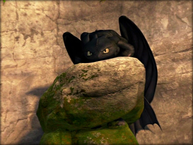Toothless   Toothless the Dragon Wallpaper 33059176 800x600