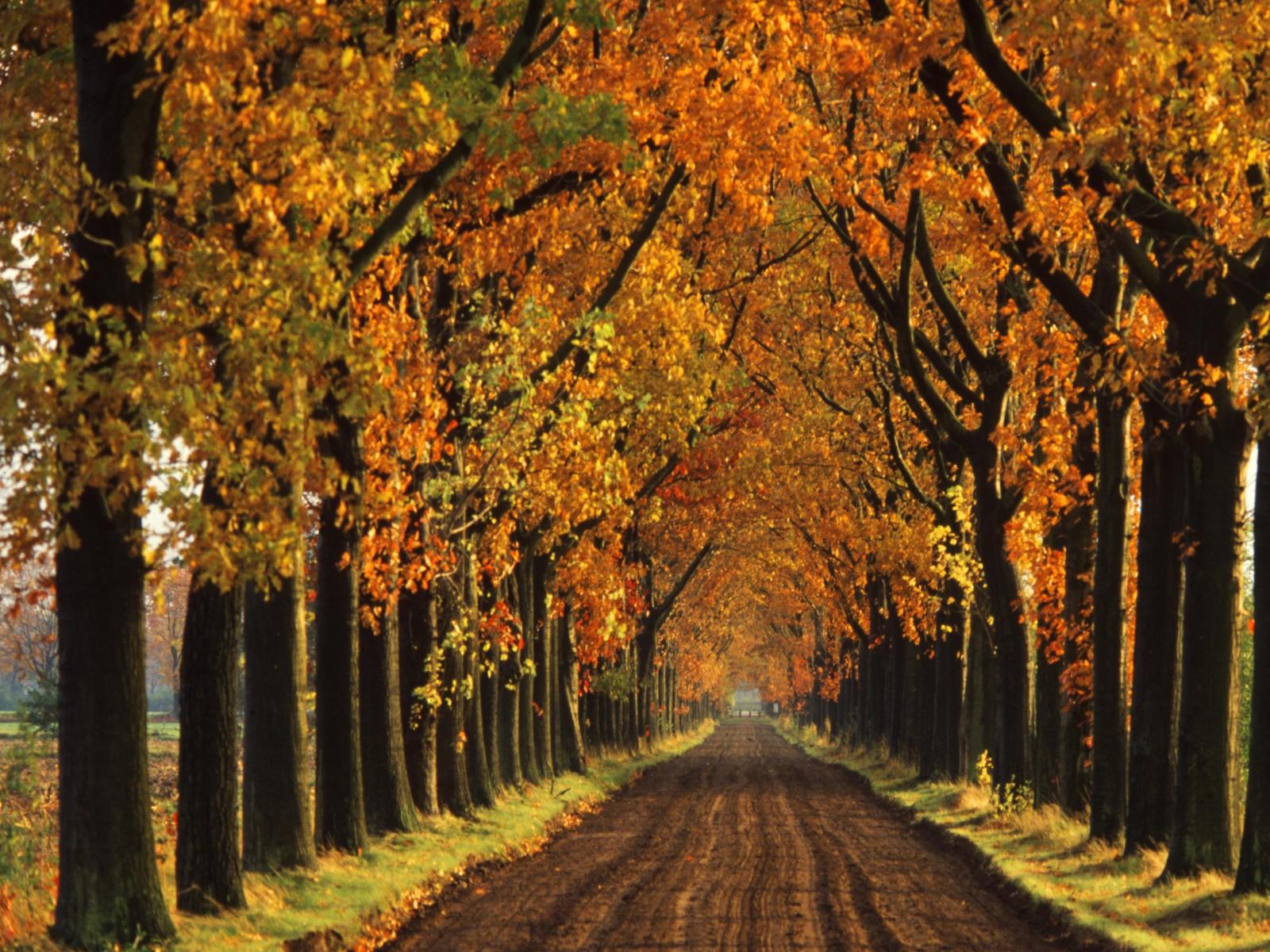 48 Free Early Fall Desktop Wallpapers On Wallpapersafari