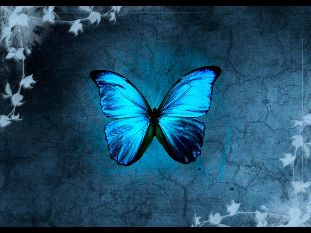 Blue Butterfly Backgrounds wallpaper Blue Butterfly Backgrounds hd 1024x768