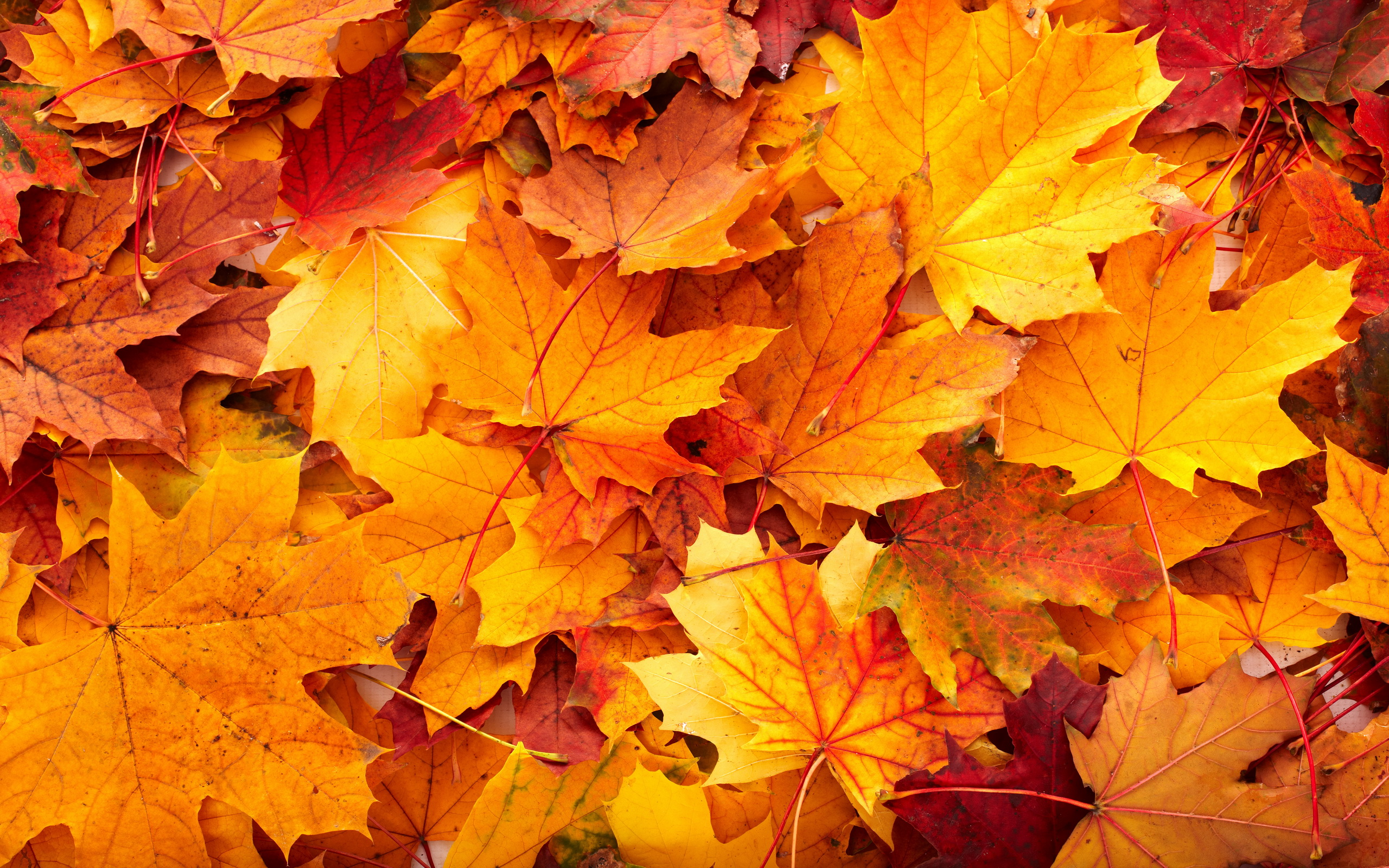 fall leaves background 20807 21344 hd wallpapers   Athens GA Weather 2560x1600