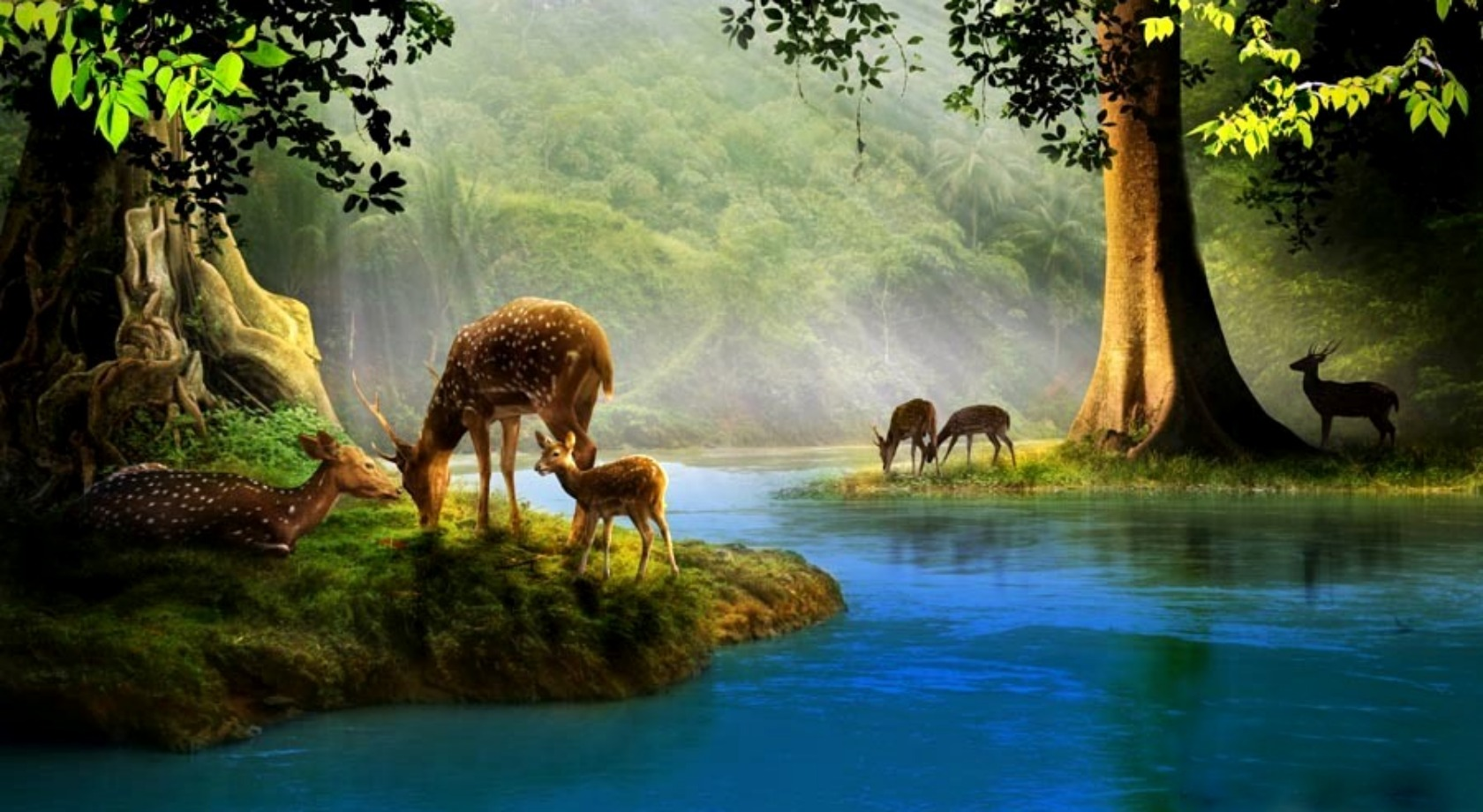 Deer Computer Wallpapers Desktop Backgrounds 1680x920 Id 124150 1680x920