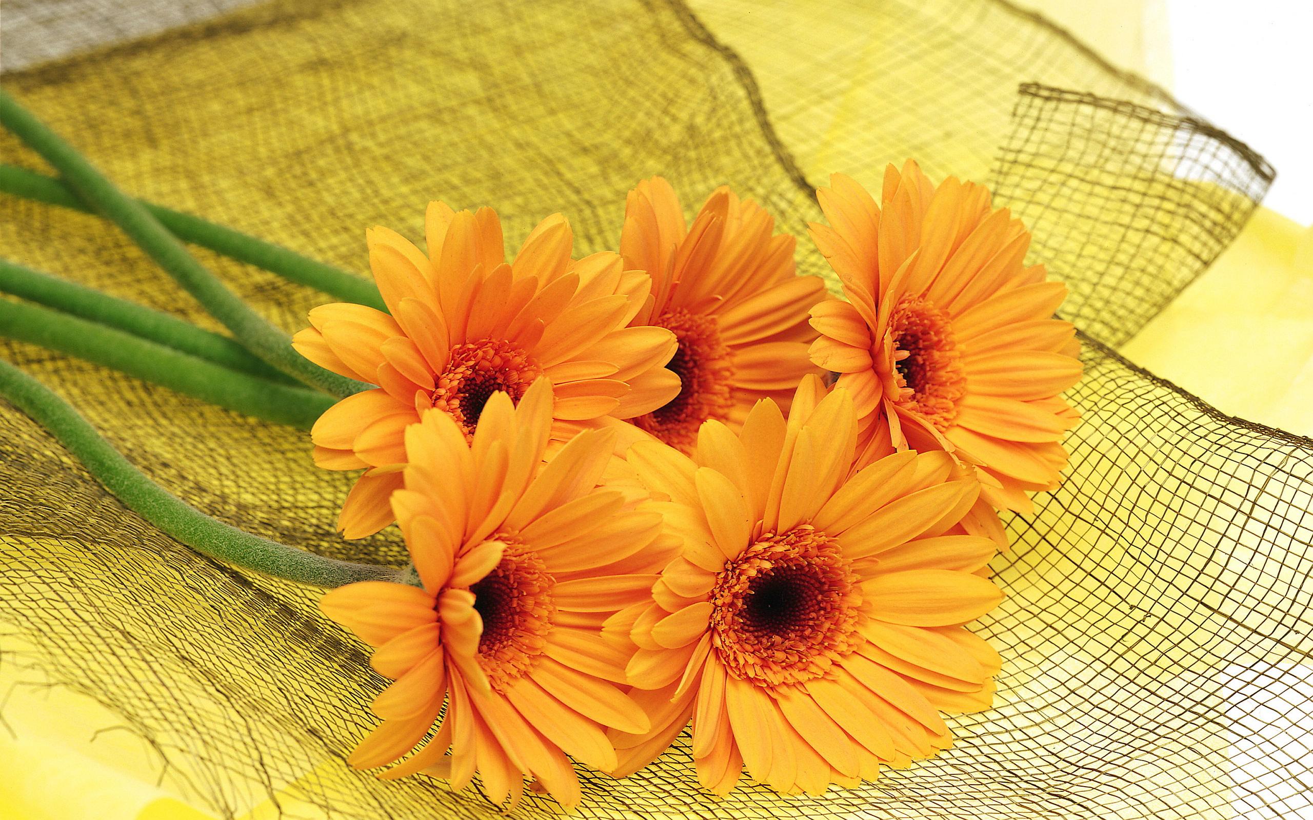 Lovely Orange Flowers Wallpaper 846603 2560x1600px By Slavasan Lynam