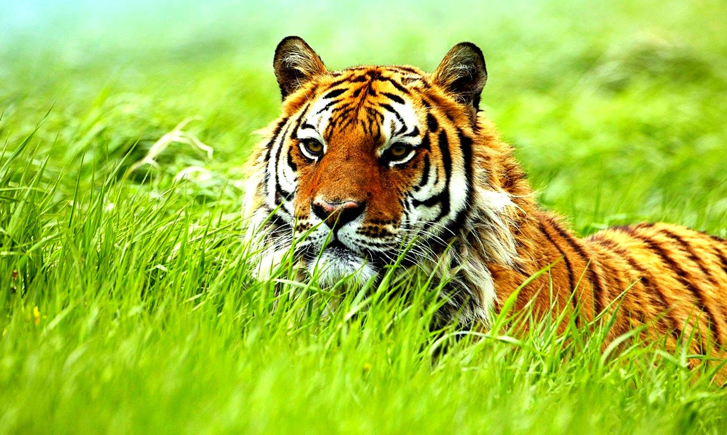 Wild Animals Wallpapers