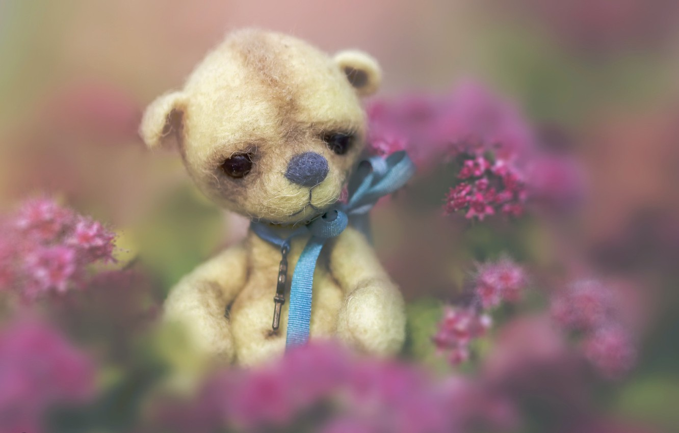 Wallpaper background toy bear images for desktop section 1332x850