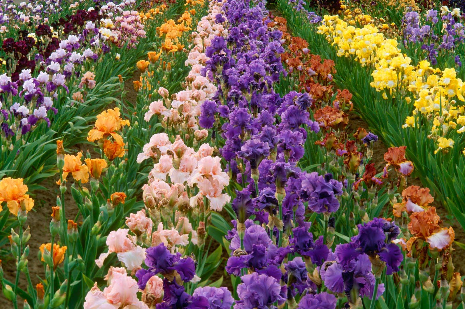 flower garden flower forest cool wallpapers wonderful flower garden 1600x1066