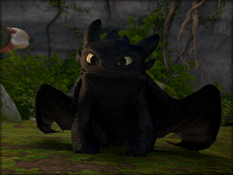 Toothless   Toothless the Dragon Wallpaper 33059179 800x600